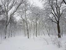 Un parque en la nieve en una tormenta Imágenes de archivo libres de regalías