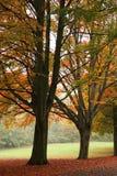 Un parque en otoño Imágenes de archivo libres de regalías