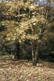 Un parque en otoño Foto de archivo
