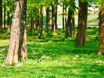 Un parque natural a Agliana imagen de archivo