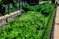 Un parterre avec l'herbe verte et les buissons images stock