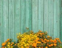 Un parterre avec les fleurs jaunes et oranges Photos stock