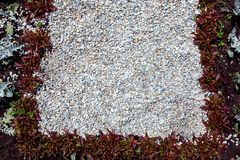Un parterre décoré des usines à feuilles caduques image libre de droits