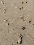 Un paseo con mi perro Imagen de archivo libre de regalías