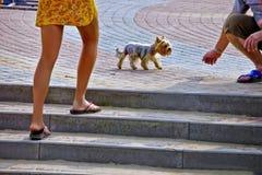 Un paseo con mi perro Foto de archivo libre de regalías
