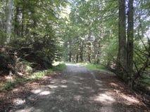 Un paseo en el bosque Fotos de archivo