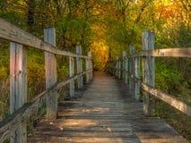 Un paseo en el bosque en un día del otoño Foto de archivo