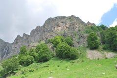 Un paseo en las montañas en verano Fotos de archivo
