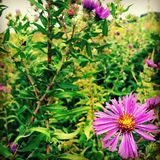 Un paseo florido Fotografía de archivo
