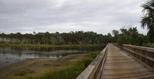 Un paseo marítimo a través de la región pantanosa y del bosque tropical enorme, Talbot Island State Park grande, la Florida, los  imágenes de archivo libres de regalías