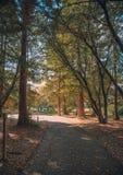 Un paseo a través de la naturaleza Fotos de archivo