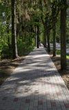 Un passaggio pedonale pavimentato fra il vicolo dell'albero immagini stock libere da diritti