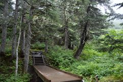 Un passaggio pedonale in una foresta pluviale Fotografia Stock Libera da Diritti