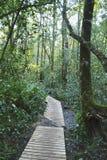 Un passaggio pedonale in una foresta verde fertile Fotografie Stock Libere da Diritti