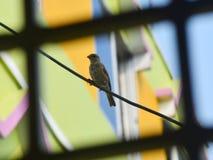 Un passero sta sedendosi su un cavo fotografia stock libera da diritti