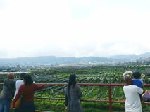 Un pasto más verde foto de archivo
