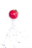 Un pasto sano fresco - pomodoro immagine stock