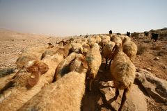 Un pastor con multitud Fotos de archivo libres de regalías