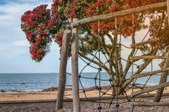 Un patio por la playa con un árbol floreciente hermoso del pohutukawa y el mar en el fondo fotografía de archivo libre de regalías