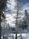 Un patio trasero de invitación en el bosque en un día de invierno Nevado Fotos de archivo libres de regalías