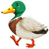 Un pato libre illustration
