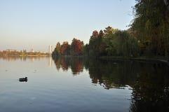 Un pato en un lago Fotos de archivo libres de regalías