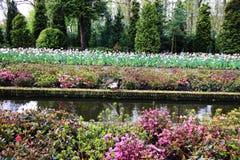 Un pato rodeado por las flores hermosas numerosas Imagen de archivo libre de regalías