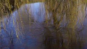 Un pato solitario en un pantano metrajes