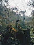 Un pavone che sta sulla roccia in Taman Safari Indonesia Fotografie Stock Libere da Diritti