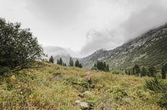 Un paysage brumeux, une vue des falaises, la forêt, montagnes d'Ergaki Photographie stock libre de droits