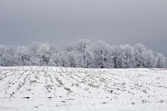 Un paysage d'hiver de champ de ferme Photo libre de droits
