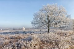 Un paysage d'hivers au milieu des Pays-Bas Photographie stock