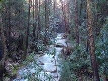 Un paysage d'un petit courant dans la forêt Photo libre de droits