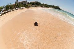 Un paysage d'une plage tropicale de sable avec une noix de coco humide photos stock