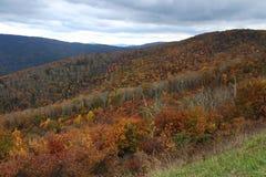 Un paysage de chute de montagne avec les arbres colorés Image libre de droits