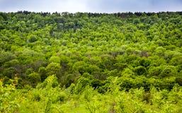 Un paysage de forêt Photographie stock