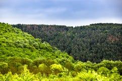 Un paysage de forêt Images libres de droits