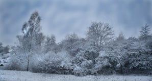 Un paysage de l'hiver Photographie stock libre de droits