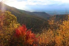 Un paysage de montagne avec les arbres colorés en automne Photographie stock