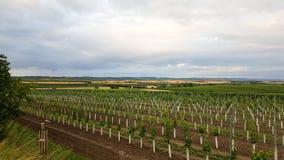 Un paysage des vignobles autrichiens avec un ciel nuageux photo libre de droits