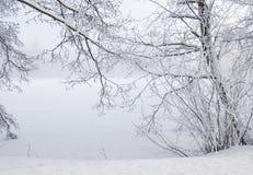 Un paysage gelé avec les branches et les arbres givrés Photos libres de droits