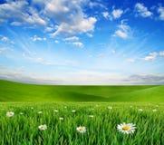 Un paysage magique avec l'herbe verte et le ciel bleu Images libres de droits