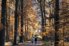 Un paysage merveilleux de forêt d'automne aux Pays-Bas près de la ville d'Utrecht photographie stock libre de droits