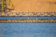 Un paysage naturel des oiseaux de mer se reposant sur de vieux poteaux d'un brise-lames photo stock