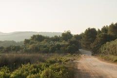 Un paysage rural avec des chèvres, une route rurale et des arbres photographie stock libre de droits