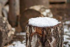Un pedazo de abedul cubierto con nieve Fotos de archivo libres de regalías