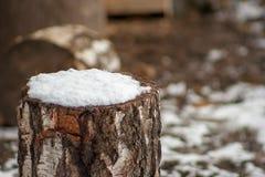 Un pedazo de abedul cubierto con nieve Fotografía de archivo libre de regalías