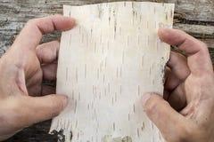 Un pedazo de corteza de abedul en las manos en un fondo del viejo Imagen de archivo