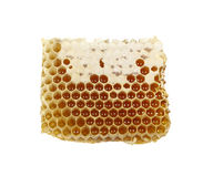 Un pedazo de panal con la miel Imagen de archivo