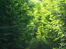 Un pedazo de un paseo agradable de la mañana Imagen de archivo libre de regalías